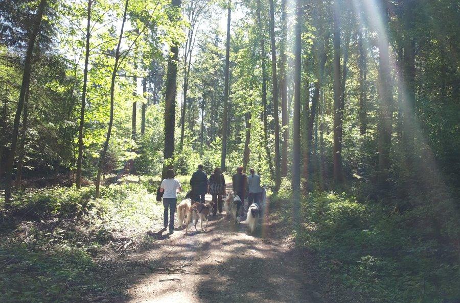 A Truppe im Wald 1 m